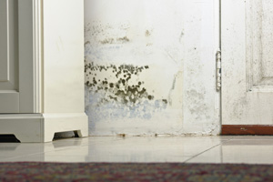 Mold testing and inspection services from Silver spring's experts