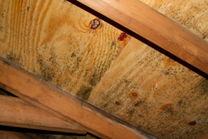 Mold growing on roof sheathing in Rockville attic